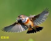 花鳥照:鳥12.jpg