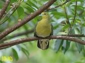 花鳥照:鳥16.jpg