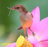 格照語法1:各種鳥顲10.jpg