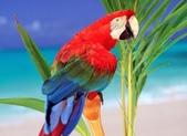 文語法2:美鳥1.jpg