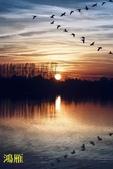 花鳥照:鳥3.jpg