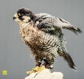 花鳥照:鳥6.jpg