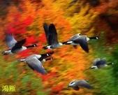 花鳥照:鳥1.jpg