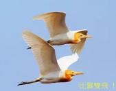 文語法1:比翼雙飛12.jpg