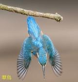 花鳥照:鳥15.jpg