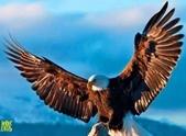 花鳥照:鳥10.jpg
