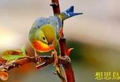 花鳥照:鳥19.jpg