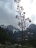 泥龍相簿:白雪紅花.jpg