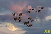 花鳥照:鳥5.jpg