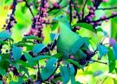 花鳥照:鳥18.jpg