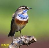 花鳥照:鳥13.jpg
