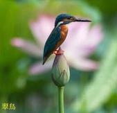 花鳥照:鳥14.jpg