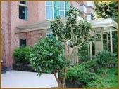 【高林閣一樓景觀豪邸】:庭院