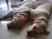 :dogs and hualian 2010 for blog 4_img_1.jpg