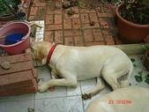 :dogs and hualian 2010 for blog 4_img_4.jpg