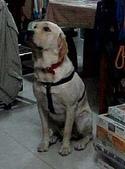 :dogs and hualian 2010 for blog 4_img_8.jpg