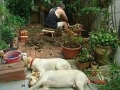 :dogs and hualian 2010 for blog 4_img_5.jpg