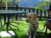:dogs and hualian 2010 for blog 4_img_12.jpg