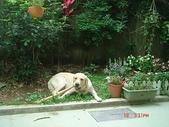 :dogs and hualian 2010 for blog 4_img_6.jpg