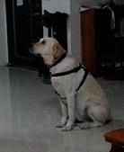 :dogs and hualian 2010 for blog 4_img_9.jpg