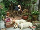 :dogs and hualian 2010 for blog 4_img_3.jpg