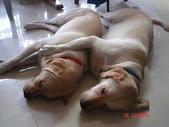:dogs and hualian 2010 for blog 4_img_0.jpg