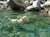 :dogs and hualian 2010 for blog 4_img_66.jpg