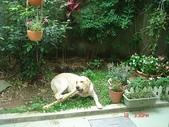 :dogs and hualian 2010 for blog 4_img_7.jpg
