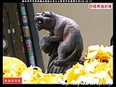 歲次辛卯年雲林縣北港朝天宮天上聖母平安遶境大典(1):北港迓媽祖002.jpg