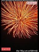 高雄市小港區金聯會中壇元帥往雲林馬鳴山鎮安宮進香回駕遶境:小港金聯會066.jpg