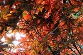 <4~6月>宜蘭棲蘭神木、陽明山海芋、高中死黨婚禮(史):1087196803.jpg
