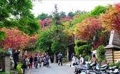 <2010.2~3月>32行館貴婦下午茶、宜蘭羅東林場、台北奧萬大、桃園藍月山莊:1695854503.jpg