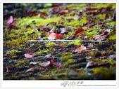 * 望見 玉山 之巔 ~ 塔山 步道 (4 篇):TAT-Blog-21-206.JPG