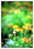 我從另一角度 ~ 望見 澎湖 馬公の美 & 自己的心情:WA-Blog-13-5-027.jpg