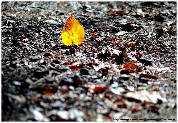 * 山風15度C吹拂 ~ 合歡溪 步道 (2):TAT-Blog-22-67.jpg