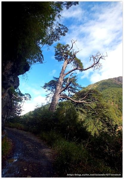 * 山風15度C吹拂 ~ 合歡溪 步道 (2):TAT-Blog-22-87.jpg