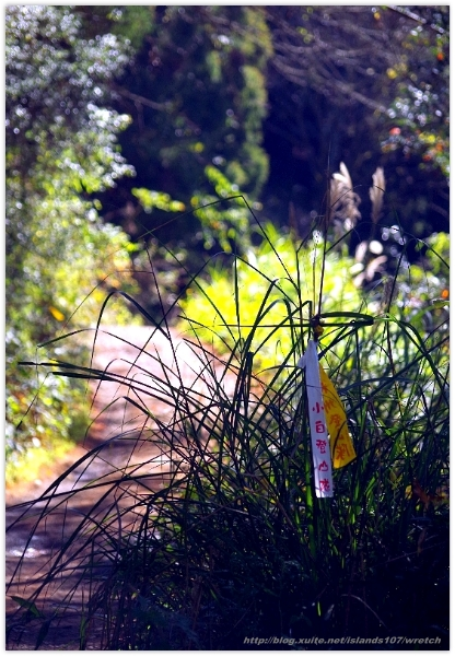 * 山風15度C吹拂 ~ 合歡溪 步道 (2):TAT-Blog-22-65.jpg