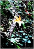 * 千年沉睡裡;甦醒著 ~ 司馬庫斯 & 鎮西堡 (中篇) Part 2:TW-Blog-Pic-30(2)-75.jpg