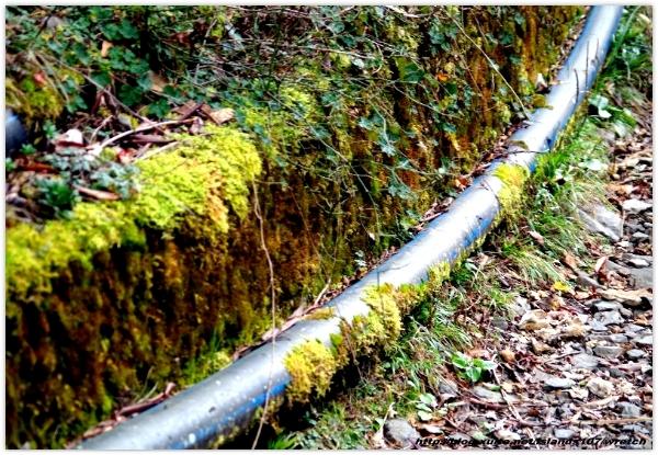 * 山風15度C吹拂 ~ 合歡溪 步道 (3):TAT-Blog-22-130.jpg