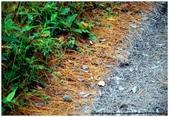 * 山風15度C吹拂 ~ 合歡溪 步道 (3):TAT-Blog-22-170.jpg