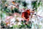 * 山風15度C吹拂 ~ 合歡溪 步道 (1):TAT-Blog-22-54.jpg
