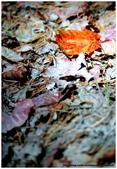 * 山風15度C吹拂 ~ 合歡溪 步道 (1):TAT-Blog-22-59.jpg