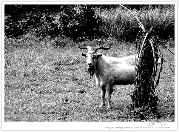 * 在 島嶼 一方 ~ 蘭嶼 (上篇):TW-Blog-Pic-29-26.jpg