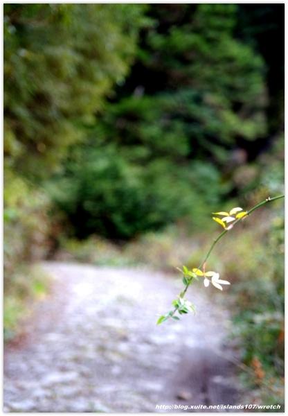 * 山風15度C吹拂 ~ 合歡溪 步道 (3):TAT-Blog-22-143.jpg