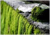 * 山風15度C吹拂 ~ 合歡溪 步道 (2):TAT-Blog-22-76.jpg
