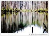 * 美景 總在千山萬水之後 ~ 水漾森林 (3):TW-Blog-23(2)-47.jpg