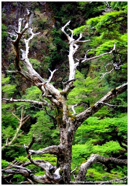 * 山風15度C吹拂 ~ 合歡溪 步道 (3):TAT-Blog-22-135.jpg