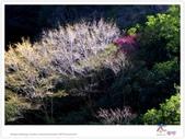 太魯閣 ~ 步道冬遊 2014 ~ part 6:TAT-Blog-35-165.jpg