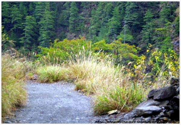* 山風15度C吹拂 ~ 合歡溪 步道 (3):TAT-Blog-22-157.jpg