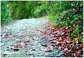 * 山風15度C吹拂 ~ 合歡溪 步道 (3):TAT-Blog-22-171.jpg